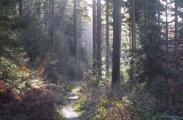 The Dood Wood Near Keswick Information And Trails Visit