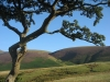 The path up Skiddaw from Applethwaite.