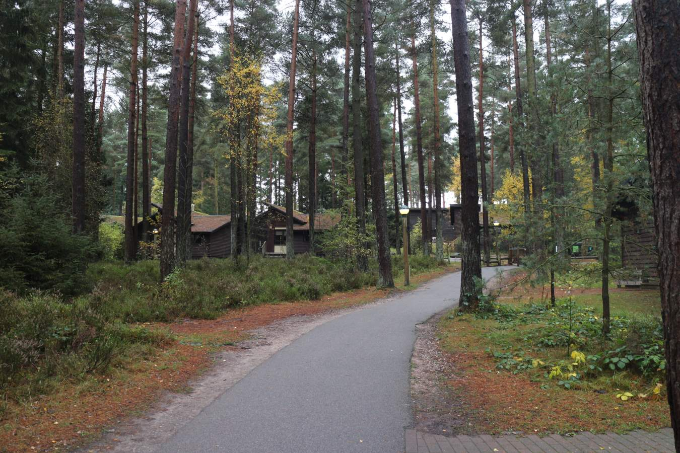 Center Parcs Whinfell Forest - Visit Cumbria