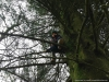 Tree climbing in Holme Wood