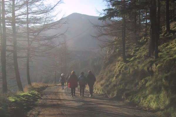 Whinlatter Forest, the Lake District | Information Guide ...