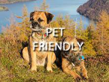 image of a dog for lake district accommodation that welcomes pets