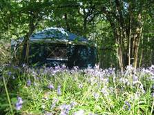 image of woodland and glamping yurts in the lake district at windermere