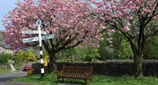 image of cherry trees at ireby serving as an image link to the information page to ireby village