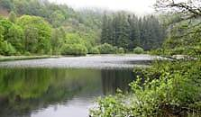 an image of yew tree tarn