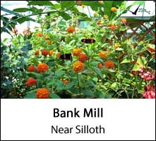 image of orange flowers and three red butterflys at bank mill garden centre in silloth in cumbria