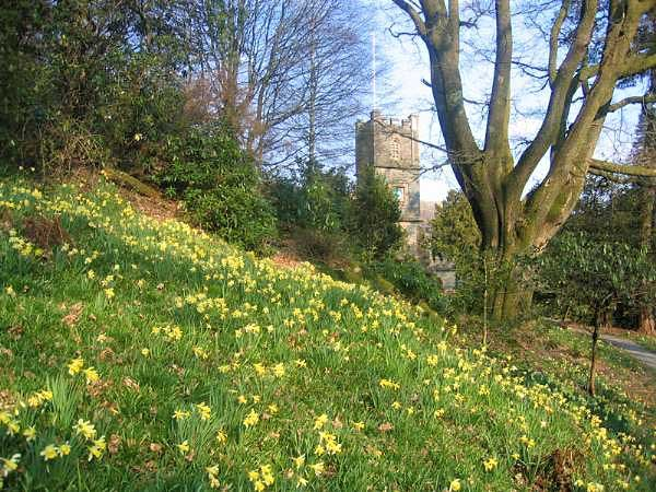 image of daffodils in Dora's field looking towards St Mary's Church at Rydal in the Lake District