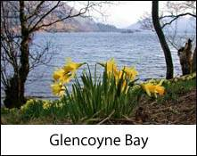 an image of daffodils at glencoyne bay on ullswater that inspired william wordsworth to write his famous poem daffodils