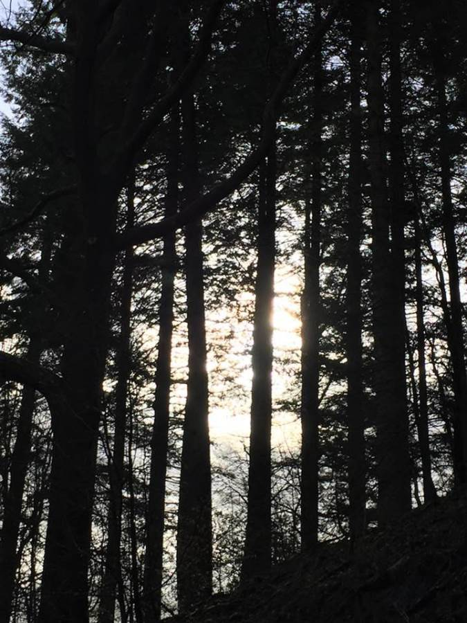an image of coniferous trees in grizedale forest