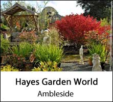 image of plants at hayes garden world garden centre in ambleside in the lake district page