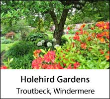 image of red flowers and a tree at holehird gardens at troutbeck near windermere in the lake district page