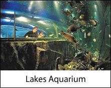 an image of an aquarium tunnel and fish at the lakes aquarium, an animal attraction in the lake district near windermere