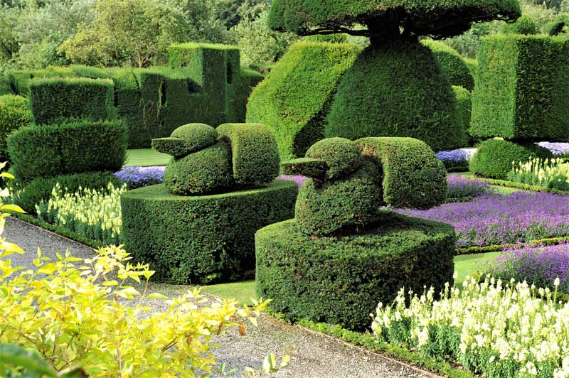 image of topiary at Levens Hall near Kendal in Cumbria