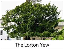 an image of the lorton yew in the lake district that inspired william wordsworth to write a poem