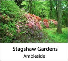 image of trees and shrubs in a woodland clearing at stagshaw gardens at ambleside in the lake district page