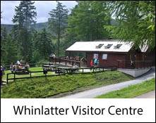 image of whinlatter visitor centre and visitors in the trees near keswick in the lake district uk