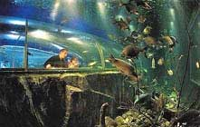 image of fish at the Lakes Aquarium, a visitor attraction in Windermere in the Lake District