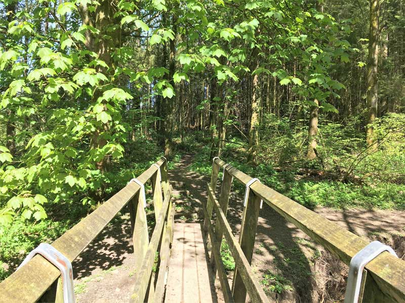 image of a wooden bridge over a stream in Gilcrux wood