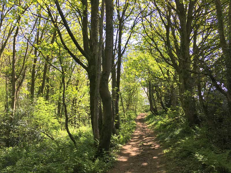 image of trees and a path at the Gyhll in Gilcrux