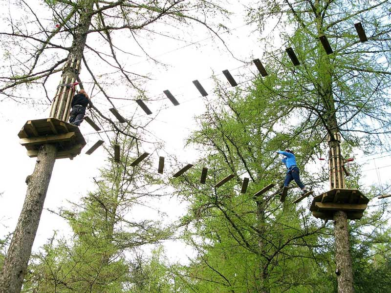 image of people using aerial walkways in the trees at Go Ape in Whinlatter Forest in the Lake District
