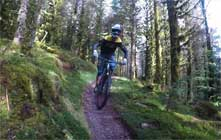 image of mountain biking at Whinlatter
