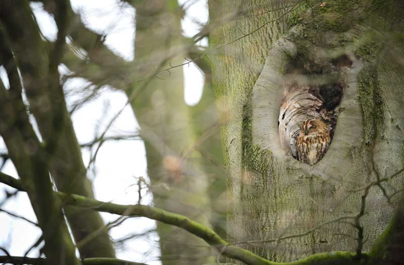 image of an owl in a tree as the rspb discovers what's on in the Lake District at night