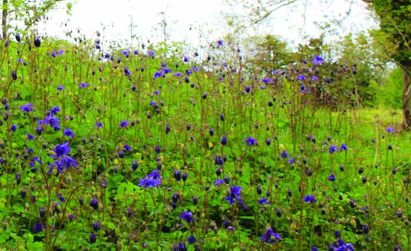 image of wildflowers at Latterbarrow Wildlife Reserve in Cumbria