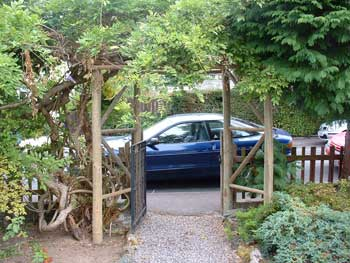 image of a newly constructed timber arch and a large old wisteria in Keswick in the Lake District
