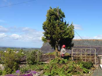 image of garden tree work near Cockermouth